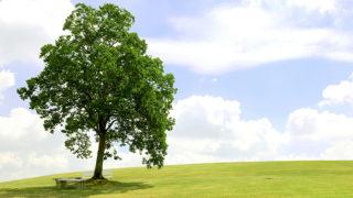 樹木葬には意外な落とし穴が? メリットとデメリットを比較